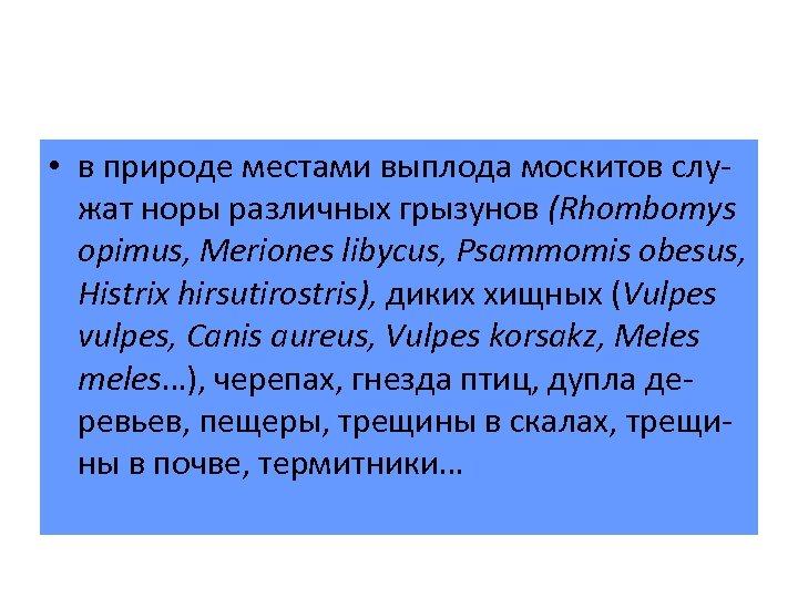 • в природе местами выплода москитов служат норы различных грызунов (Rhombomys opimus, Meriones