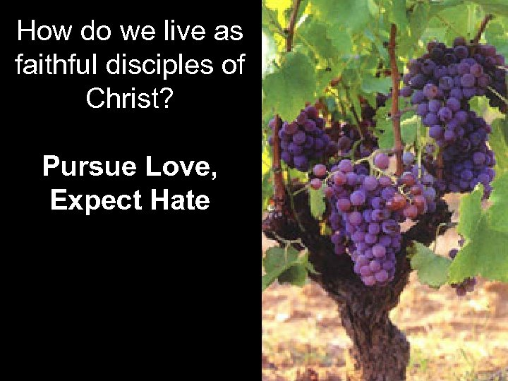How do we live as faithful disciples of Christ? Pursue Love, Expect Hate