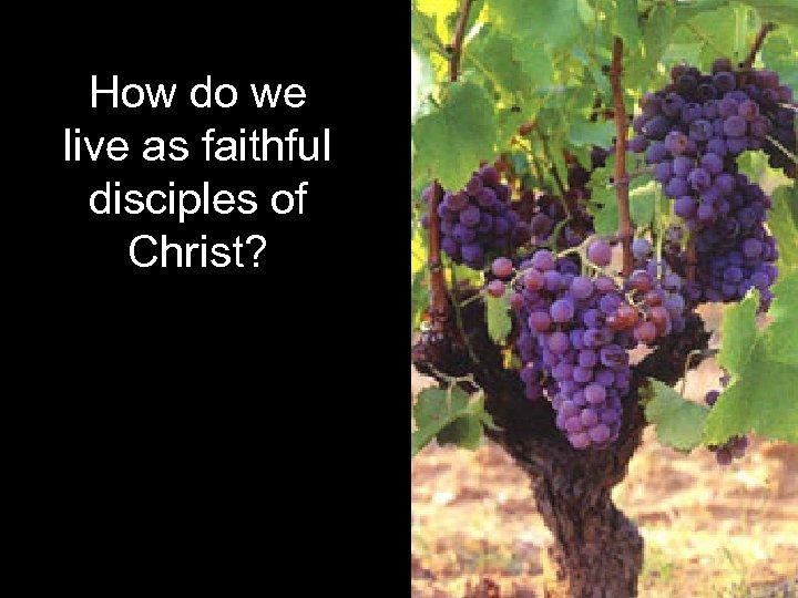 How do we live as faithful disciples of Christ?