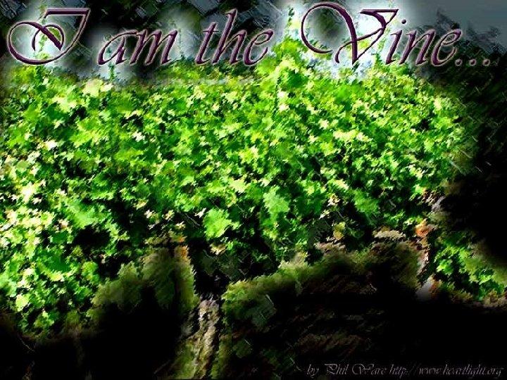 I am the Vine… (15: 1)