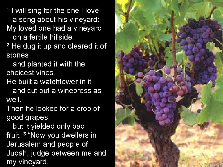 1 I will sing for the one I love a song about his vineyard: