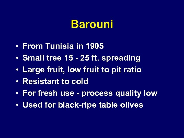 Barouni • • • From Tunisia in 1905 Small tree 15 - 25 ft.
