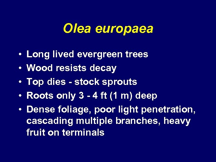 Olea europaea • • • Long lived evergreen trees Wood resists decay Top dies