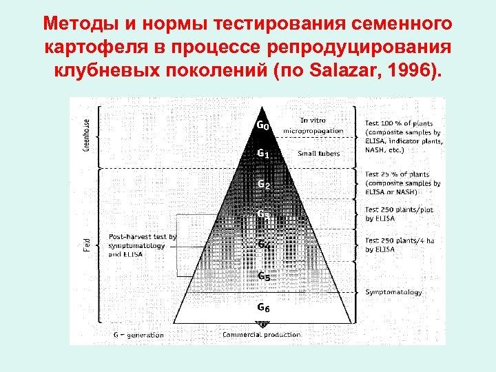 Методы и нормы тестирования семенного картофеля в процессе репродуцирования клубневых поколений (по Salazar, 1996).
