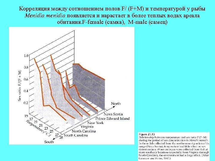 Корреляция между сотношением полов F/ (F+M) и температурой у рыбы Menidia menidia появляется и