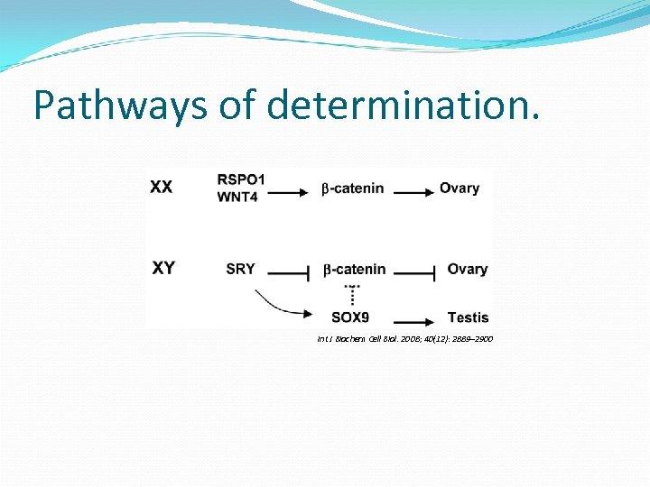 Pathways of determination. Int J Biochem Cell Biol. 2008; 40(12): 2889– 2900