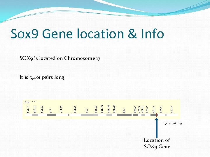 Sox 9 Gene location & Info SOX 9 is located on Chromosome 17 It