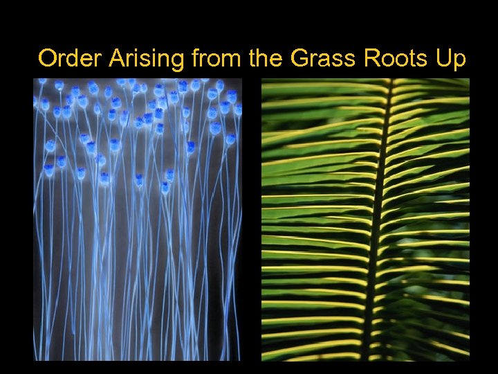 Order Arising from the Grass Roots Up