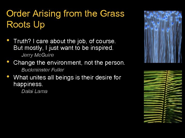 Order Arising from the Grass Roots Up • • • Truth? I care about