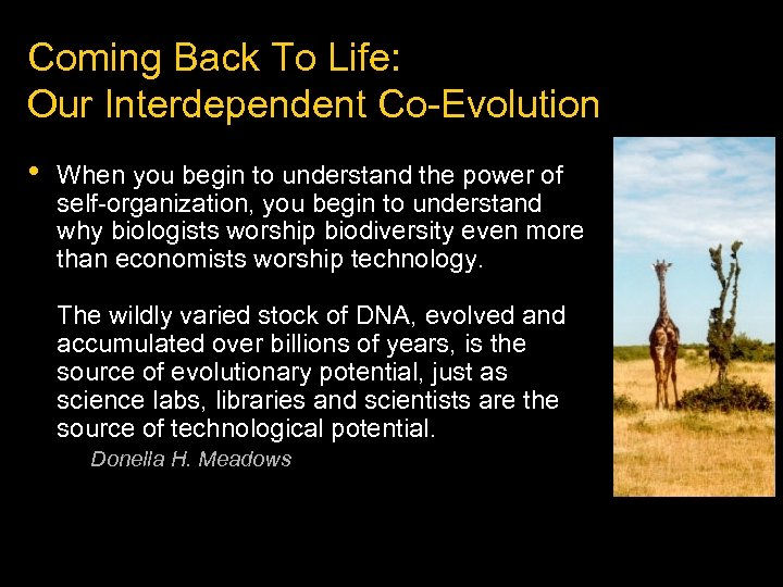 Coming Back To Life: Our Interdependent Co-Evolution • When you begin to understand the