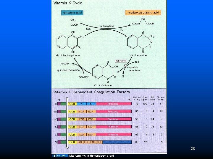 28 Mechanisms In Hematology Israel