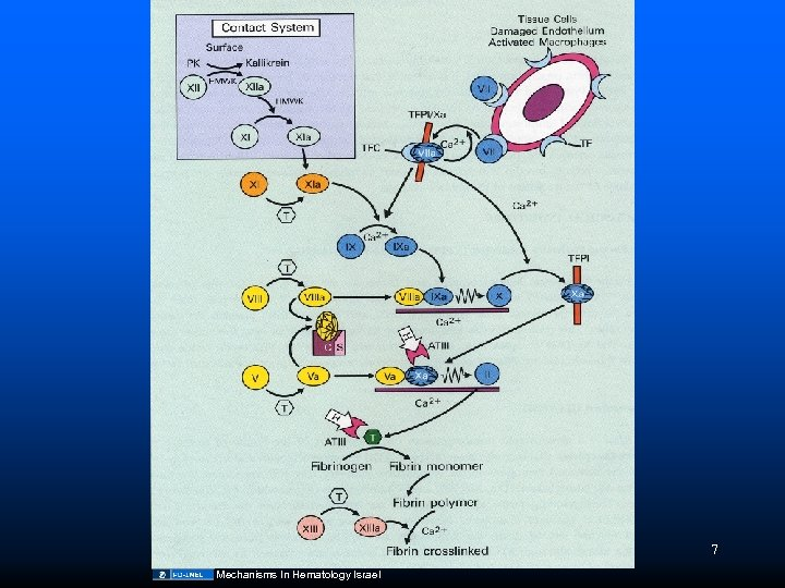 7 Mechanisms In Hematology Israel