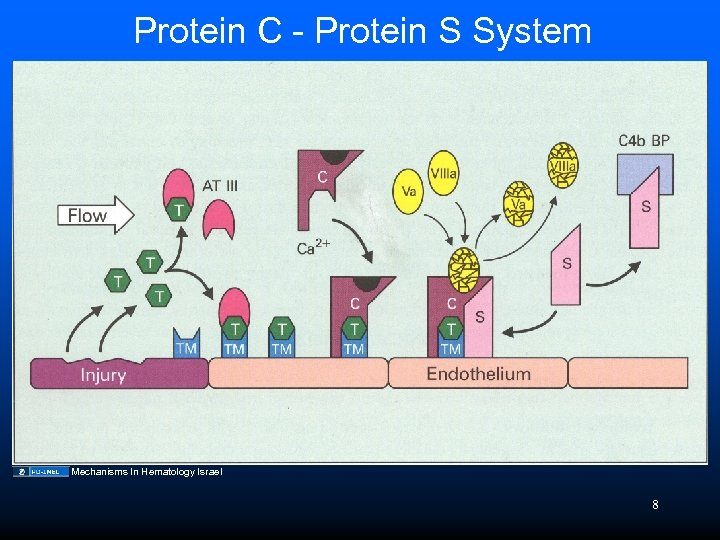 Protein C - Protein S System Mechanisms In Hematology Israel 8