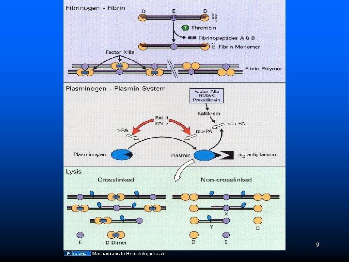 9 Mechanisms In Hematology Israel