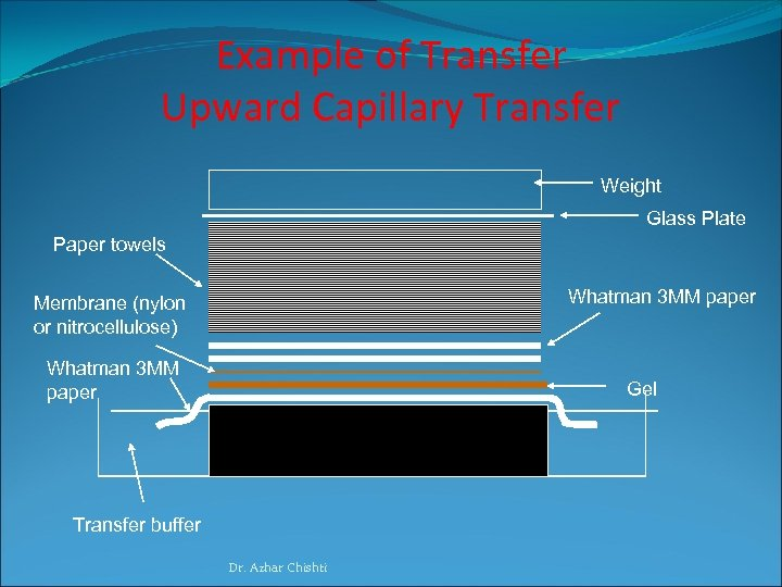 Example of Transfer Upward Capillary Transfer Weight Glass Plate Paper towels Whatman 3 MM