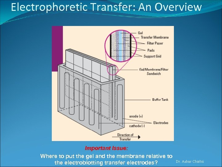 Electrophoretic Transfer: An Overview Important Issue: Where to put the gel and the membrane