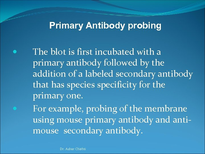 Primary Antibody probing The blot is first incubated with a primary antibody followed by