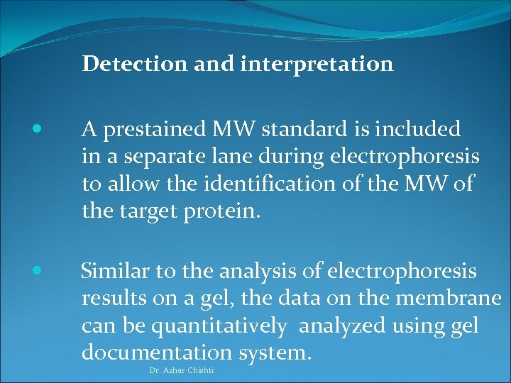 Detection and interpretation A prestained MW standard is included in a separate lane during