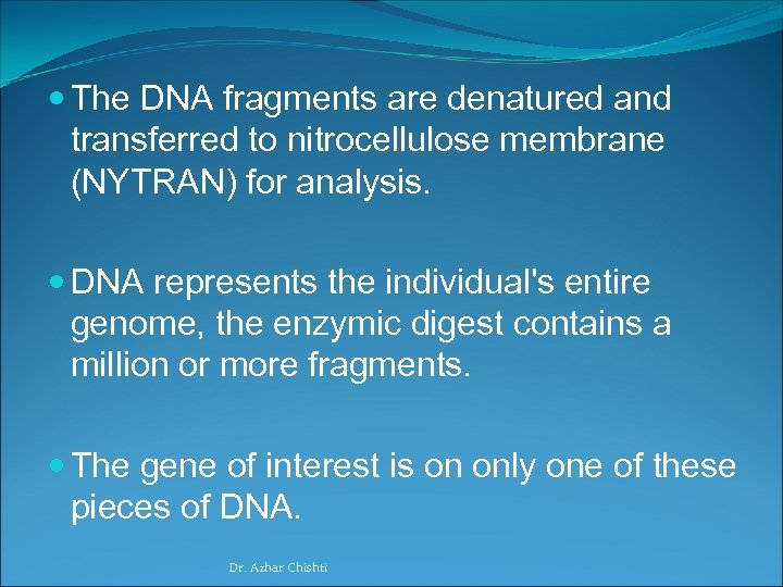 The DNA fragments are denatured and transferred to nitrocellulose membrane (NYTRAN) for analysis.