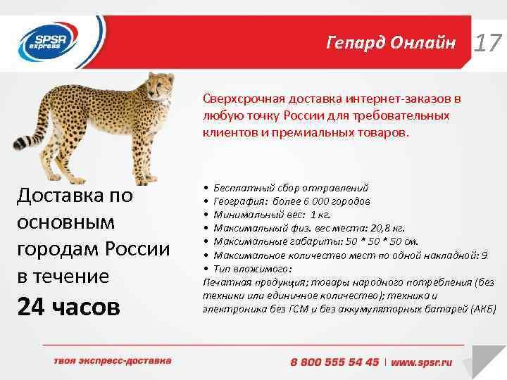Гепард Онлайн 17 Сверхсрочная доставка интернет-заказов в любую точку России для требовательных клиентов и