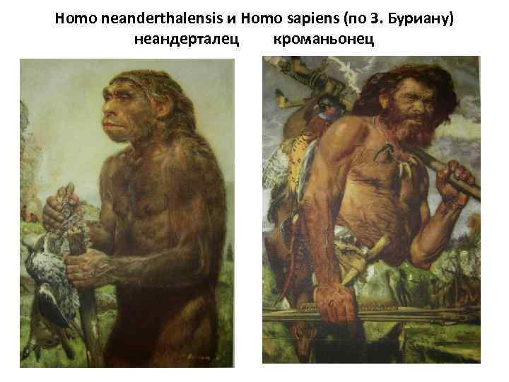 a history of the neanderthals ancestors of the homo sapiens Apparently, homo neanderthalensis women were more genetically compatible with homo sapiens men or else there were fewer opportunities for the neanderthal males to breed with sapiens women one other factor may have influenced the way hominin interbreeding played out.