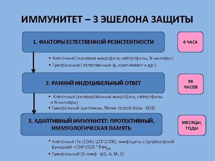 ИММУНИТЕТ – 3 ЭШЕЛОНА ЗАЩИТЫ 1. ФАКТОРЫ ЕСТЕСТВЕННОЙ РЕЗИСТЕНТНОСТИ 4 ЧАСА • Клеточные (тканевые