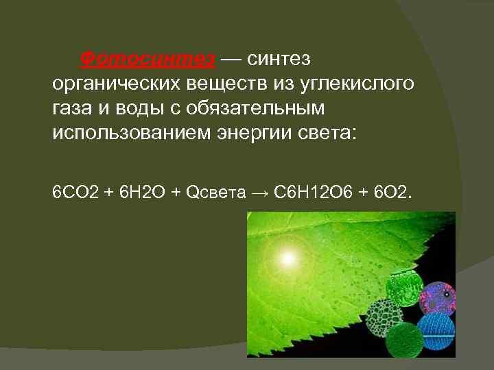прямоугольные биологическое значение воды фотосинтезе утверждали, что