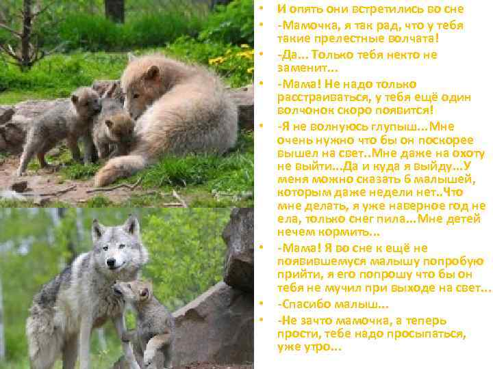 Овдовевший волк не бросил пятерых волчат   540x720