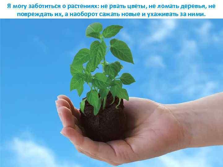 Я могу заботиться о растениях: не рвать цветы, не ломать деревья, не повреждать их,