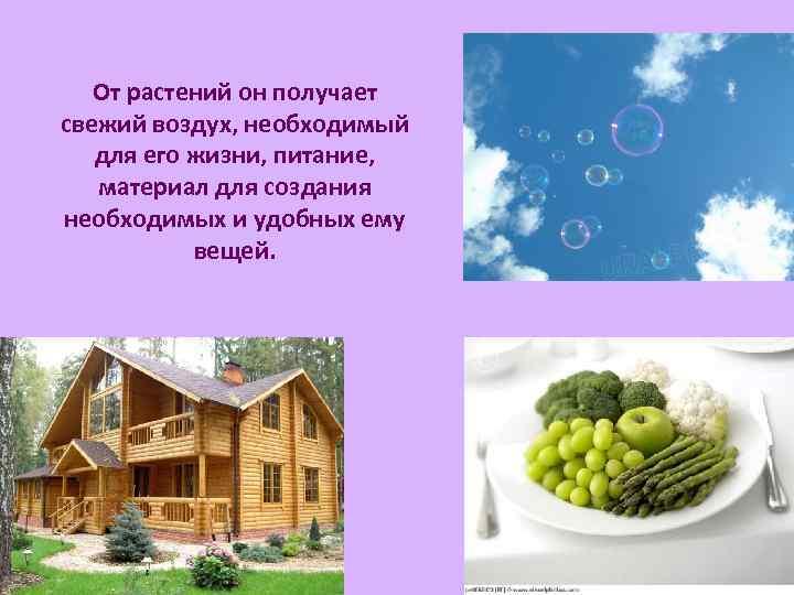 От растений он получает свежий воздух, необходимый для его жизни, питание, материал для создания