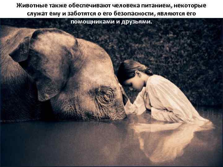 Животные также обеспечивают человека питанием, некоторые служат ему и заботятся о его безопасности, являются