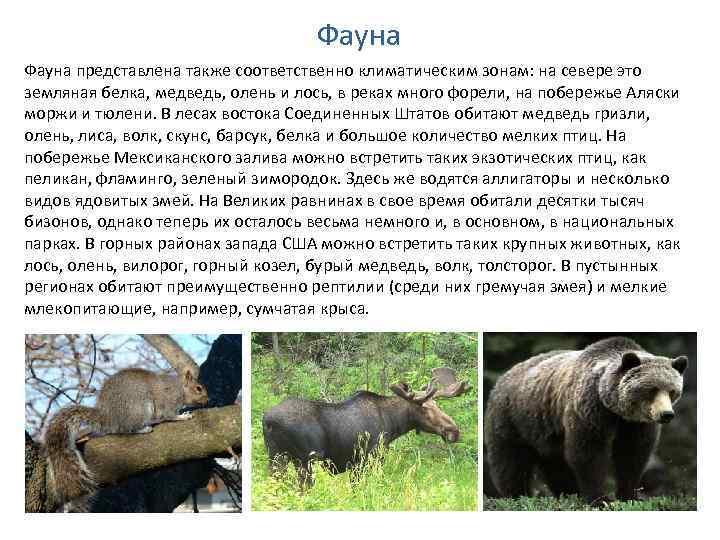 Фауна представлена также соответственно климатическим зонам: на севере это земляная белка, медведь, олень и