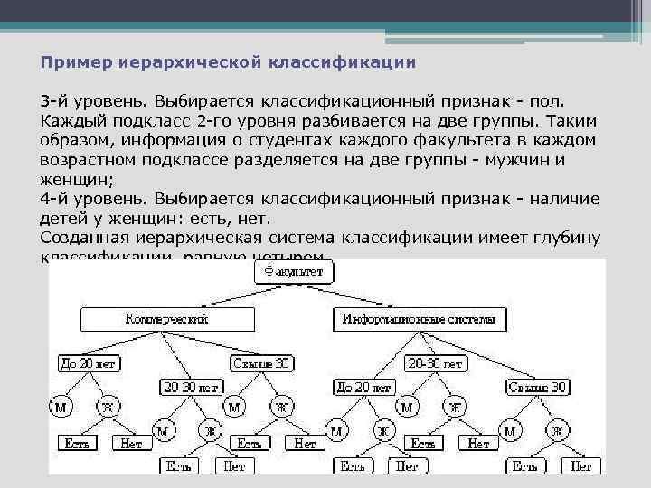 Пример иерархической классификации 3 -й уровень. Выбирается классификационный признак - пол. Каждый подкласс 2
