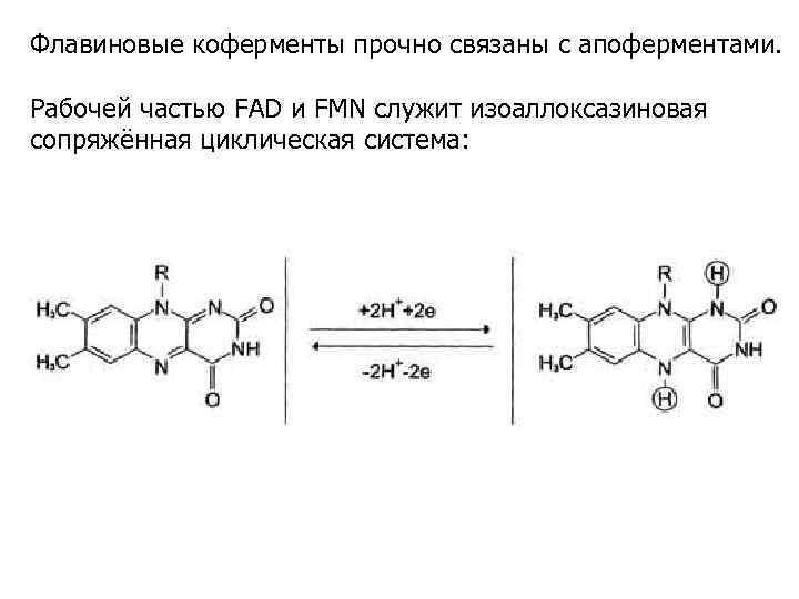 Флавиновые коферменты прочно связаны с апоферментами. Рабочей частью FAD и FMN служит изоаллоксазиновая сопряжённая