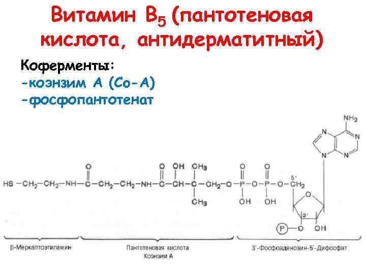 Витамин В 5 (пантотеновая кислота, антидерматитный) Коферменты: -коэнзим А (Co-A) -фосфопантотенат