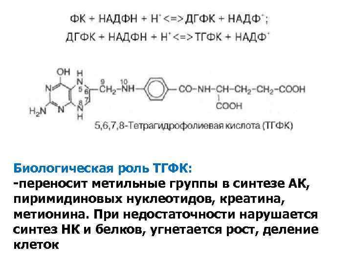 Биологическая роль ТГФК: -переносит метильные группы в синтезе АК, пиримидиновых нуклеотидов, креатина, метионина. При