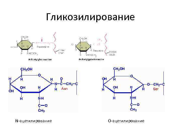 Гликозилирование N-ацетилирование О-ацетилирование