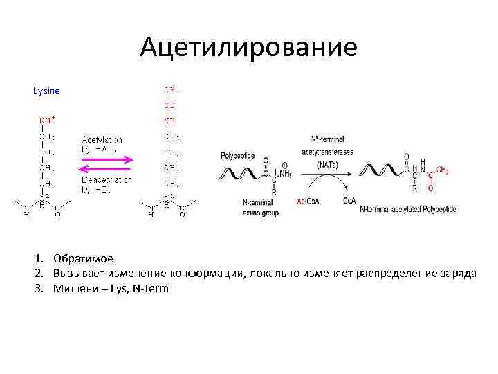 Ацетилирование 1. Обратимое 2. Вызывает изменение конформации, локально изменяет распределение заряда 3. Мишени –