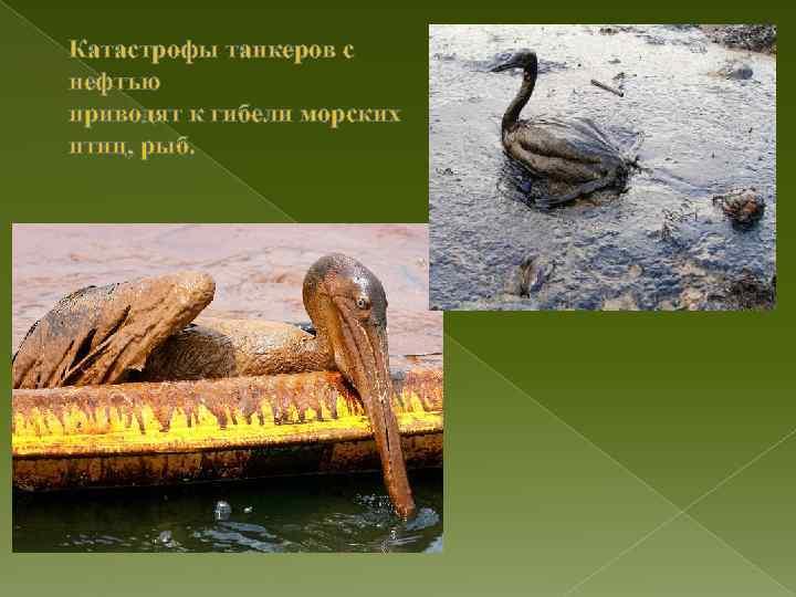 Катастрофы танкеров с нефтью приводят к гибели морских птиц, рыб.