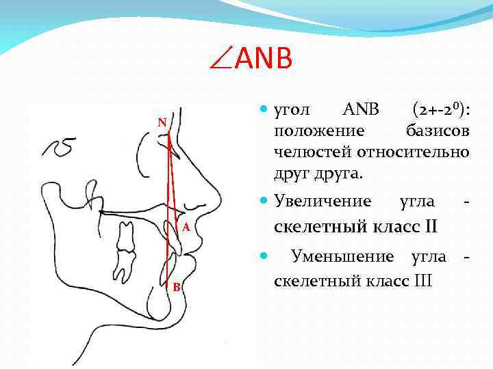 ANB угол ANB (2+-2⁰): положение базисов челюстей относительно друга. N Увеличение A B