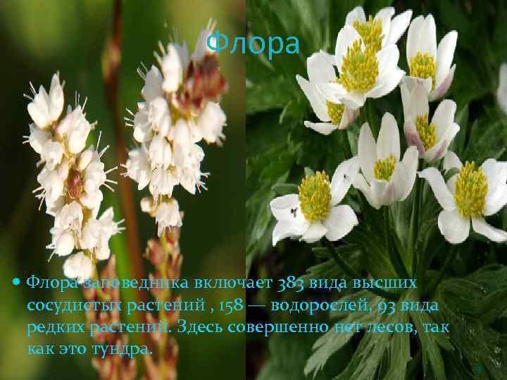 Флора заповедника включает 383 вида высших сосудистых растений , 158 — водорослей, 93 вида