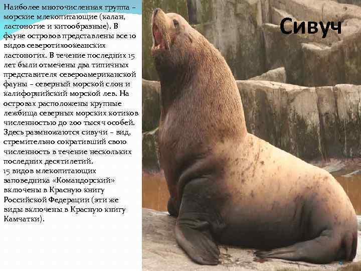 Наиболее многочисленная группа – морские млекопитающие (калан, ластоногие и китообразные). В фауне островов представлены