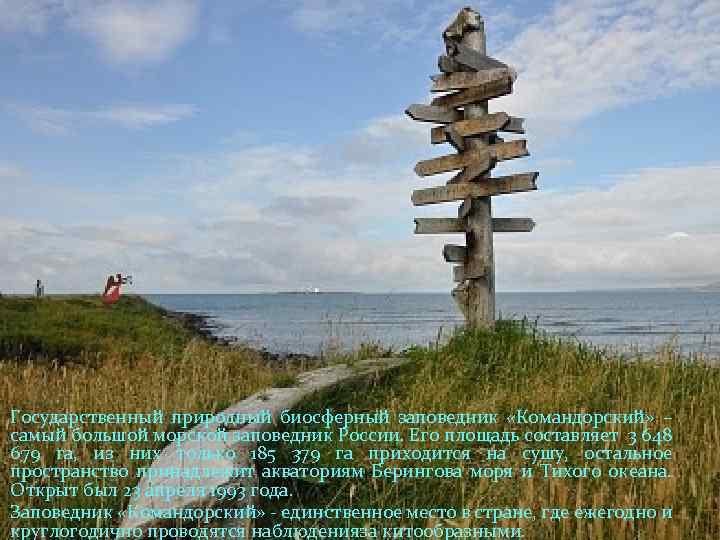Государственный природный биосферный заповедник «Командорский» – самый большой морской заповедник России. Его площадь составляет