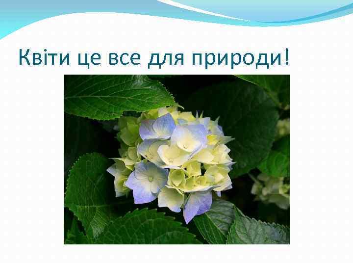 Квіти це все для природи!