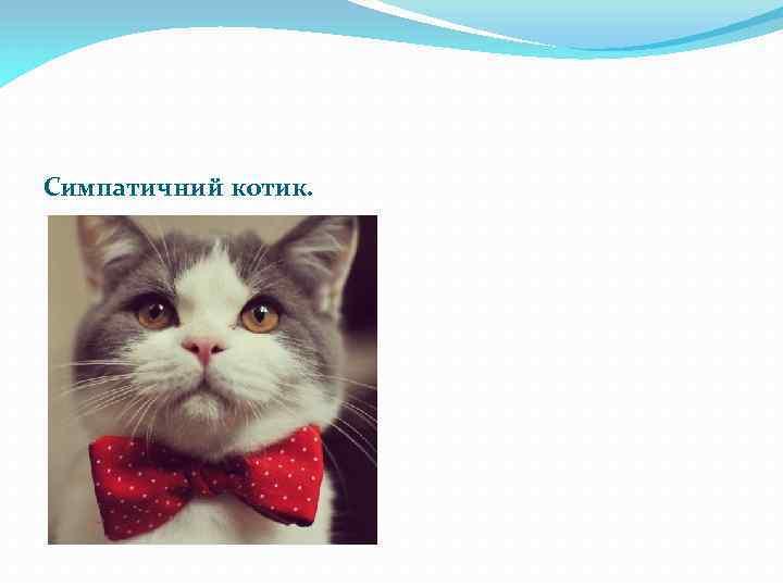 Симпатичний котик.
