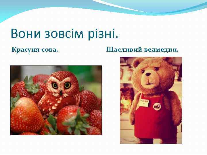 Вони зовсім різні. Красуня сова. Щасливий ведмедик.