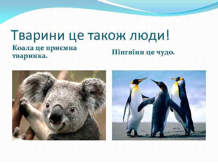 Тварини це також люди! Коала це приємна тваринка. Пінгвіни це чудо.