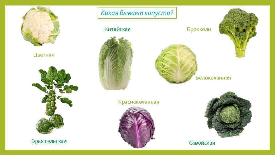 репертуаре виды капуст и их названия картинки расцветки