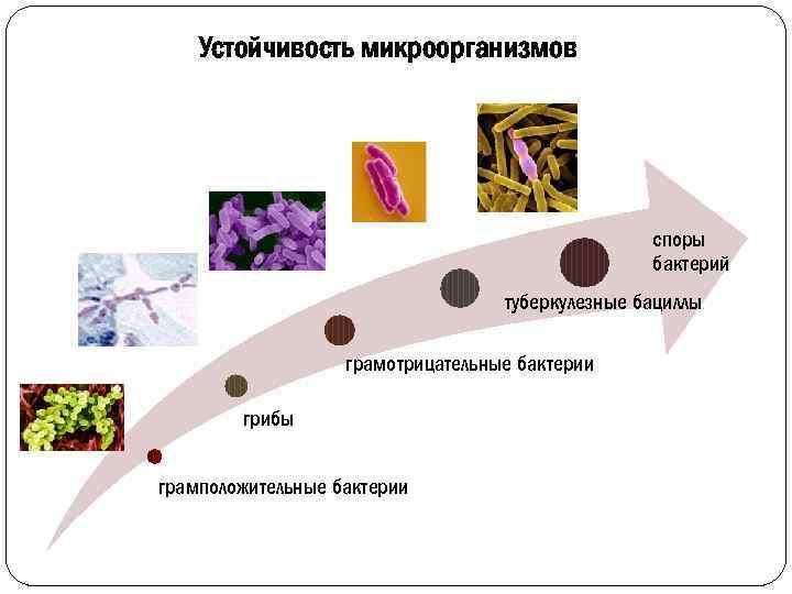 Устойчивость микроорганизмов споры бактерий туберкулезные бациллы грамотрицательные бактерии грибы грамположительные бактерии