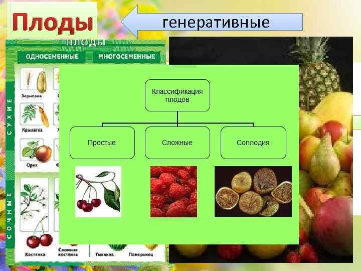Плоды генеративные